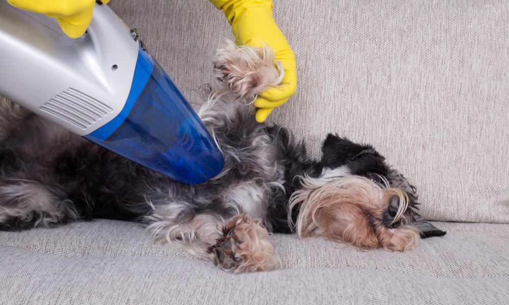 Best Handheld Vacuum for Pet Hair