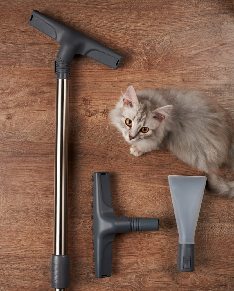 best cordless vacuum for dog hair
