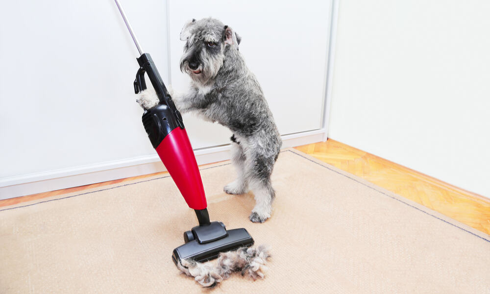cordless vacuum for pet hair