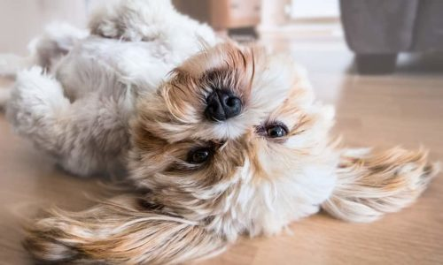 Best Way to Clean Dog Hair Off Hardwood Floors