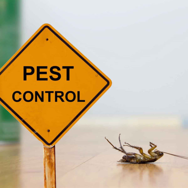 Why You Should Hire A Pest Control Company?