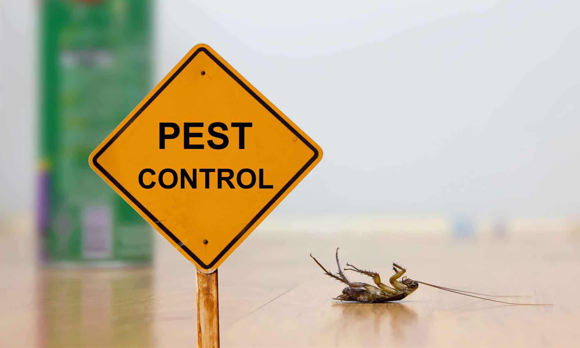 Why You Should Hire A Pest Control Company